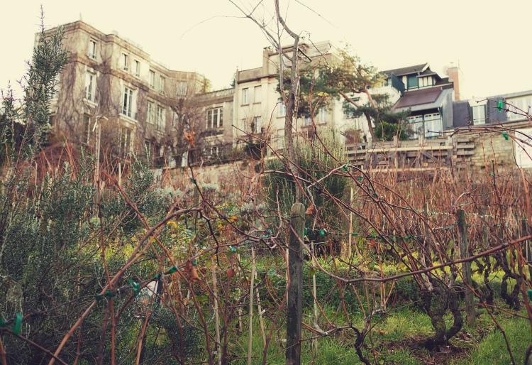 An old vineyard.