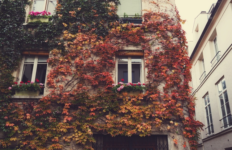 Autumn looks good on my apartment building's wall!